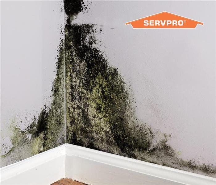 mold growth in a corner